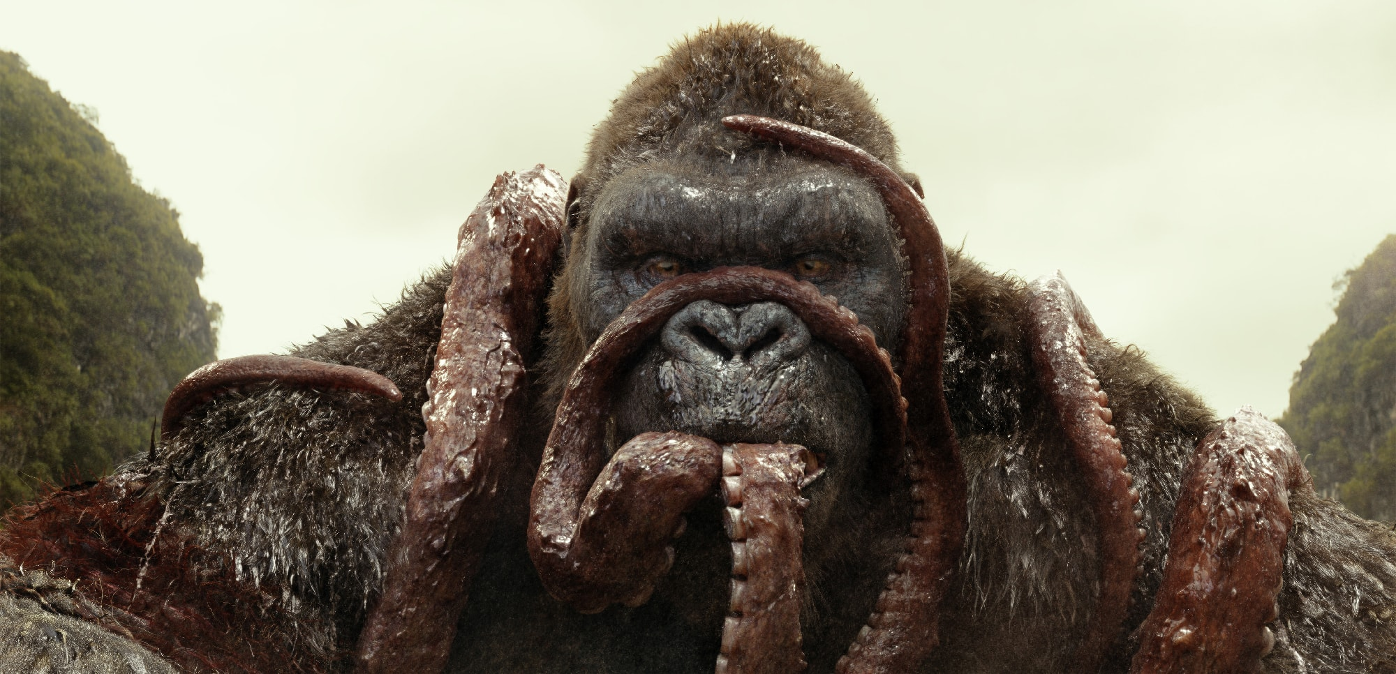 Kong eats
